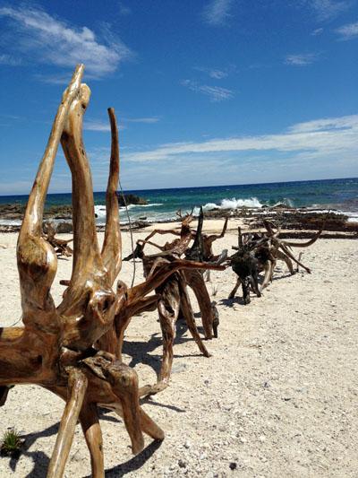 Cozumel driftwood