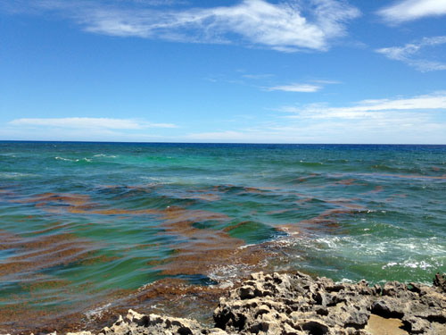 Cozumel waves