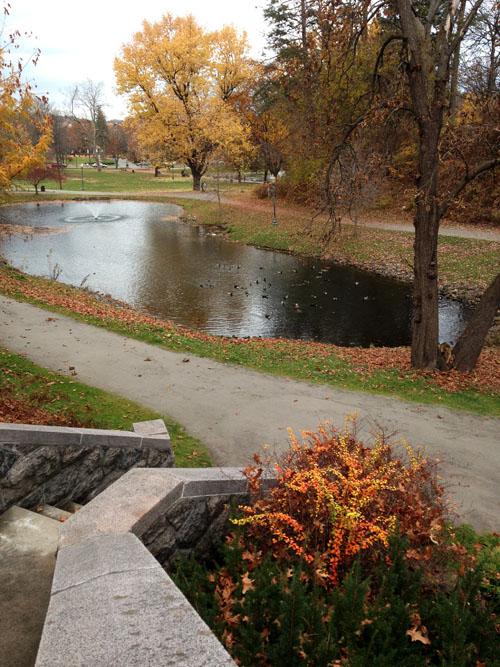 NY Pond